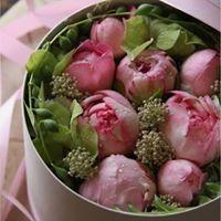 Marie Chapeaux rose